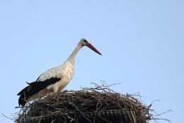 Cigüeña en su nido - Estación de San Roque