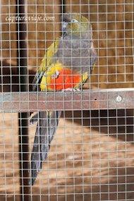 Miguelito - Loro Barranquero - Zoo de Castellar de la Frontera
