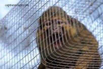 Raffi - Talapoin Norteño - Zoo de Castellar de la Frontera