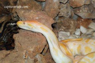 Serpiente - Zoo de Castellar de la Frontera