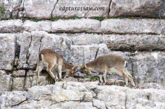 Convivencia en el Torcal de Antequera - 33