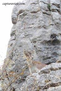 Convivencia en el Torcal de Antequera - Mi cabra