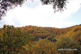 26 - Salida Agafona Valle del Genal - Castaños
