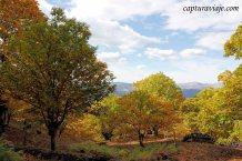 30 - Salida Agafona Valle del Genal - Castaños Valle del Genal