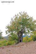 34 - Salida Agafona Valle del Genal - Vistas alredeores de Juzcar copia