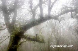 Taller de Fotografía de Paisaje - Parque Natural de los Alcornocales - 04