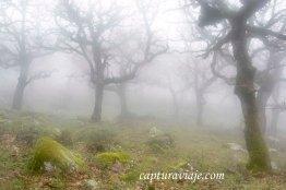 Taller de Fotografía de Paisaje - Parque Natural de los Alcornocales - 05