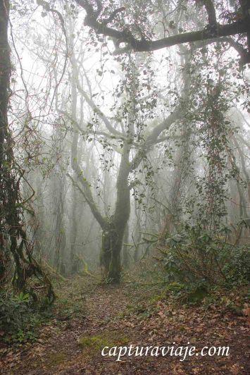 Taller de Fotografía de Paisaje - Parque Natural de los Alcornocales - 07 - M