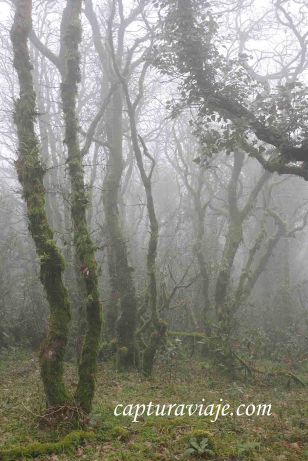 Taller de Fotografía de Paisaje - Parque Natural de los Alcornocales - 09 - M