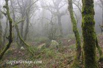 Taller de Fotografía de Paisaje - Parque Natural de los Alcornocales - 11 - M
