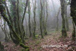 Taller de Fotografía de Paisaje - Parque Natural de los Alcornocales - 13 - M