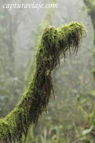 Taller de Fotografía de Paisaje - Parque Natural de los Alcornocales - 14 - M