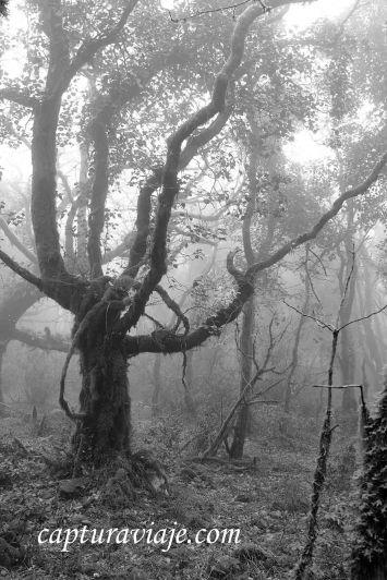 Taller de Fotografía de Paisaje - Parque Natural de los Alcornocales - 16 - M