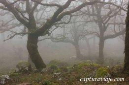 Taller de Fotografía de Paisaje - Parque Natural de los Alcornocales - 18 - M