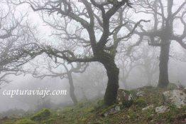 Taller de Fotografía de Paisaje - Parque Natural de los Alcornocales - 19 - M