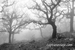 Taller de Fotografía de Paisaje - Parque Natural de los Alcornocales - 20 - M