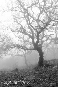 Taller de Fotografía de Paisaje - Parque Natural de los Alcornocales - 21 - M