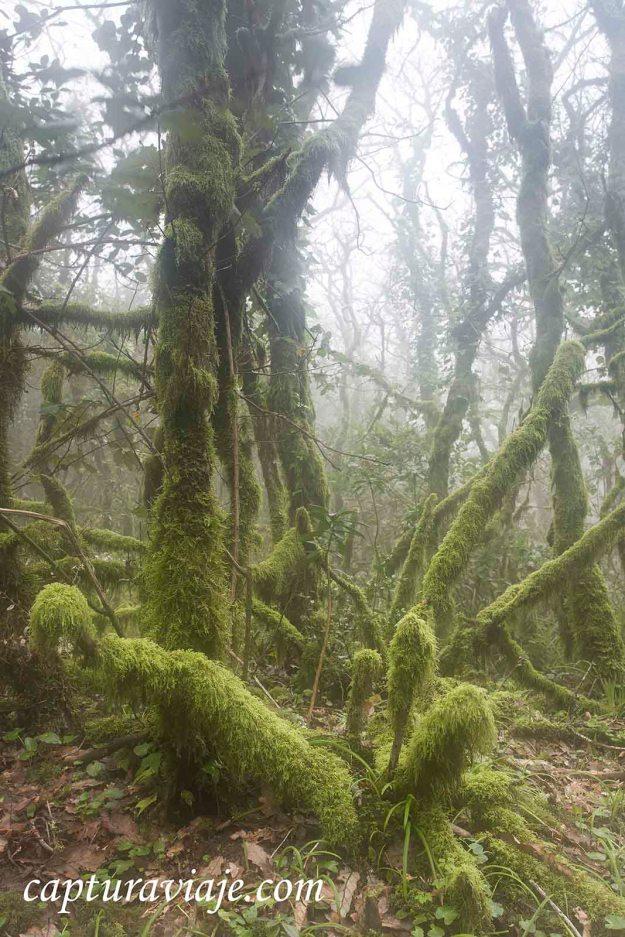 Abrigo verde - Bosque de las Nieblas - Parque Natural de los Alc