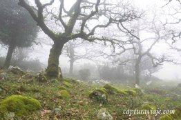 La niebla - Bosque de las Nieblas - Parque Natural de los Alcorn